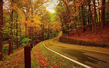 road, trees, forest, leaves, autumn