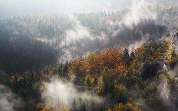 деревья, горы, лес, туман, осень, ущелье