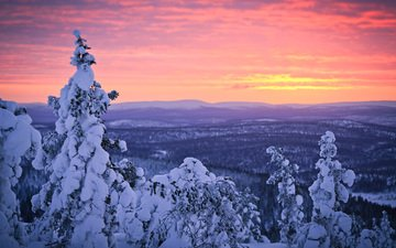 the sky, trees, snow, forest, sunset, winter, finland, lapland