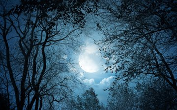 the sky, clouds, trees, branches, the moon, the full moon
