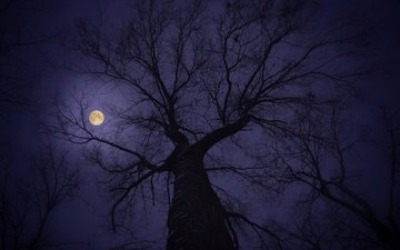 the sky, tree, branches, the moon