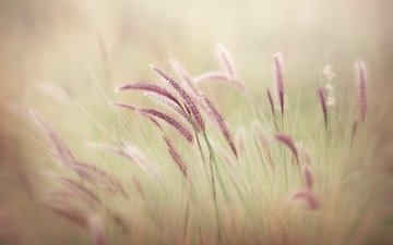 grass, nature, macro, field, blur, spikelets