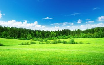 the sky, grass, clouds, trees, forest, field