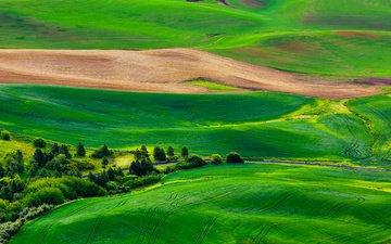 grass, trees, hills, landscape, field