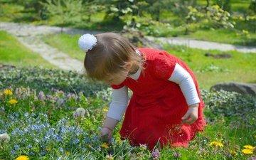 цветы, природа, дети, девочка, ребенок, полевые цветы