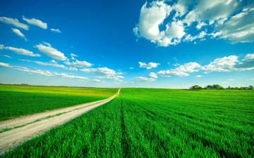 the sky, road, grass, clouds, field, horizon