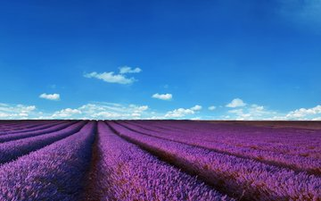 the sky, flowers, clouds, field, lavender