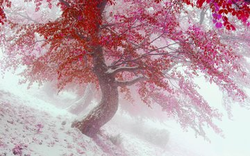 trees, snow, nature, leaves, winter, fog, autumn, vitalfoto
