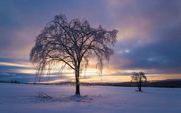 the sky, clouds, trees, snow, nature, sunset, winter