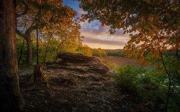 природа, лес, парк, осень