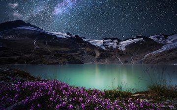 flowers, night, lake, mountains, nature, stars, simone cmoon