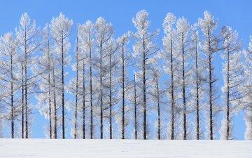 the sky, trees, nature, winter, landscape, trunks, norihiko araki