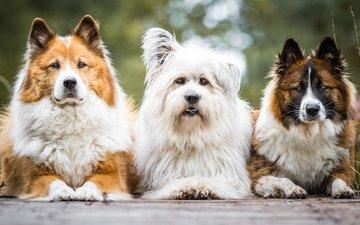 взгляд, собаки, birgit chytracek