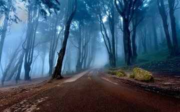 road, trees, nature, stones, forest, landscape, morning, fog, portugal