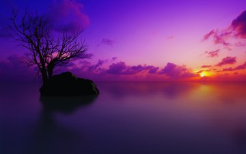 the sky, clouds, water, tree, sunset, stone, the maldives