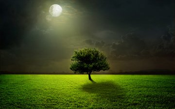 light, grass, tree, landscape, field, the moon, the full moon
