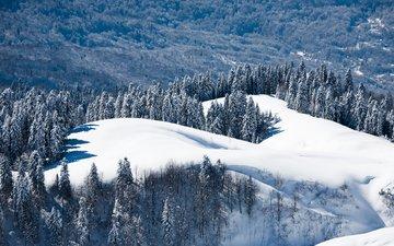 деревья, горы, снег, лес, зима, россия