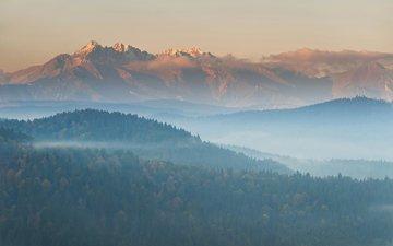деревья, горы, лес, пейзаж, утро, туман, вид сверху