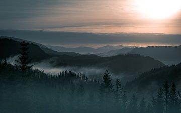 деревья, горы, лес, пейзаж, туман, норвегия