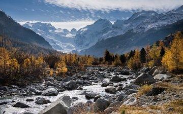 trees, mountains, snow, nature, forest, landscape, autumn