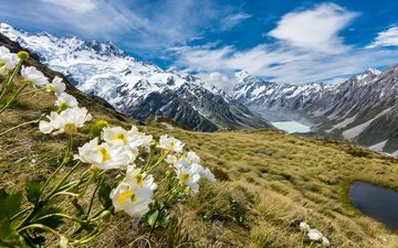 the sky, flowers, clouds, mountains, glacier, national park, buttercups, mount cook, new zealand