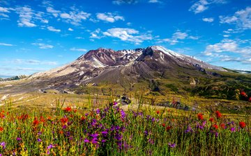 the sky, flowers, grass, clouds, mountains, the sun, nature, landscape, mountain, washington, plain, usa, meadows, mount st helens