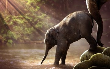water, river, nature, forest, elephant, elephants, the sun's rays, savannah, trunk