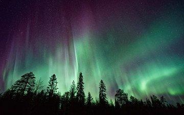 небо, деревья, лес, северное сияние