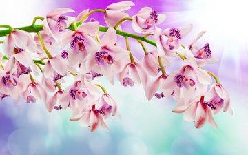 цветы, ветка, блики, размытость, орхидеи
