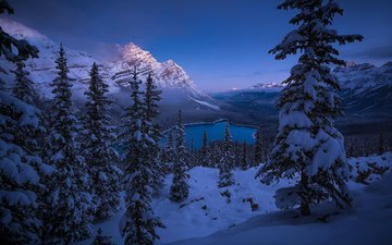 озеро, горы, снег, лес, зима, канада, национальный парк банф, peyto lake
