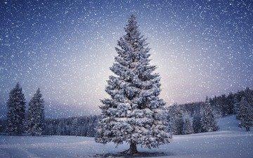 деревья, снег, природа, лес, зима, ель, снегопад