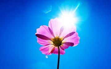 небо, цветок, лепестки, стебель, космея, солнечный день