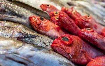еда, рыбы, рыба, магазин, морепродукты