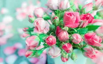 flowers, buds, roses, petals, bouquet, pink roses