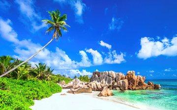 небо, облака, природа, берег, море, песок, пляж, пальмы, тропики