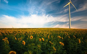 the sky, flowers, clouds, nature, field, horizon, sunflowers, windmill, wind turbine