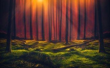 деревья, зелень, лес, стволы, солнечные лучи