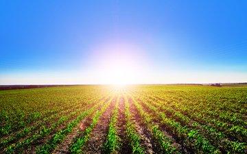 небо, поле, горизонт, солнечный день