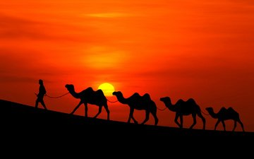 the sun, sunset, desert, people, caravan, camels