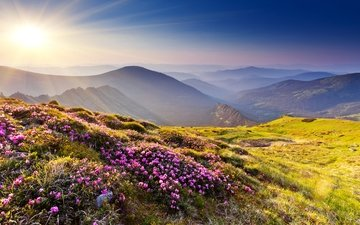 flowers, grass, mountains, the sun, hills, nature, stones, sunset, rays, summer, azalea