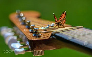 insect, guitar, music, butterfly, wings, karina fleur