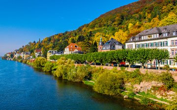 trees, the city, autumn, coast, home, germany, heidelberg