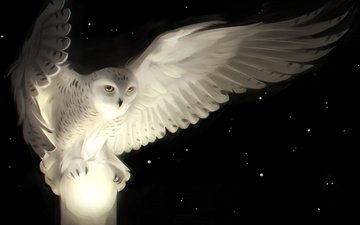 art, owl, stars, wings, bird, white owl, white owl-