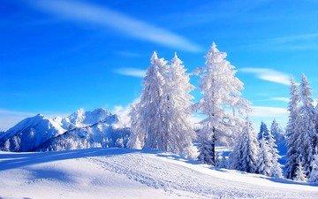 небо, облака, деревья, горы, снег, зима, иней