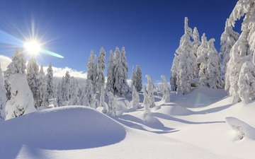 trees, the sun, snow, winter, vancouver, ate, canada, the snow, british columbia