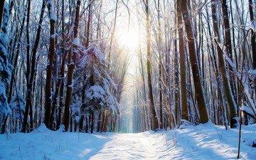 дорога, деревья, снег, лес, зима, солнечный свет