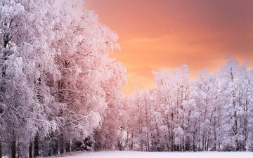 trees, forest, sunset, winter, branches, frost, norway, ren
