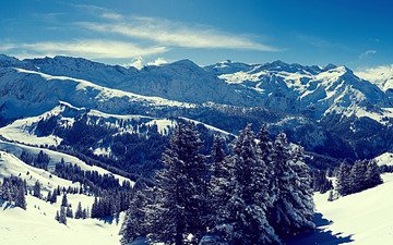 the sky, trees, mountains, snow, forest, winter, snowy peaks