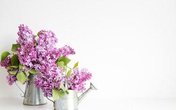 цветы, весна, букет, белый фон, сирень, лейка
