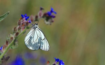 insect, flower, butterfly, wings, white